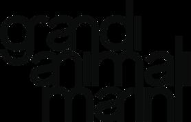 Grandi Animali Marini presentano il nuovo disco il 25 Settembre al Rocket di Milano