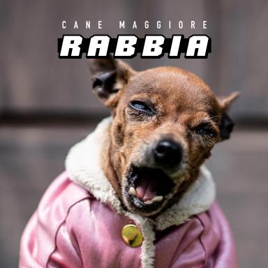 """Cane Maggiore, """"Rabbia"""": il grido di una generazione stanca della società"""