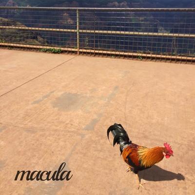 "Bacon's Chaos, ""Macula"" il nuovo EP: punk arrabbiato"